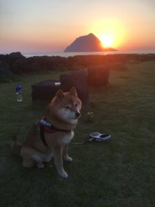 チビと夕日