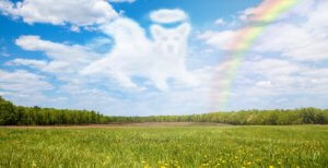 天国に登るチビ